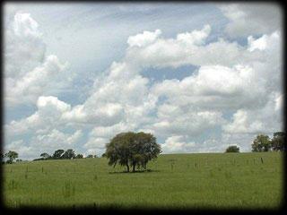 Acreage in Florida, Citrus County Land Development, Florida